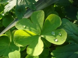 Растенията са зелени - оцветители и ароматизатори