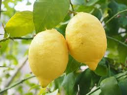 Лимоненът, съдържащ се в лимоните и произвеждан синтетично, дразни кожата